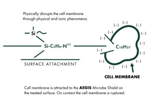 AEGIS | Surface Attachement and Cell Membrane